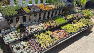 Elegant Gardens Nursery Provides A Large Selection Of Plant Material That Includes Over 1000 Variety Plants In Sizes Range From 1 Gal To 42