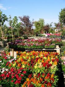 Copyright Elegant Gardens Nursery Site By Folded Crane Design